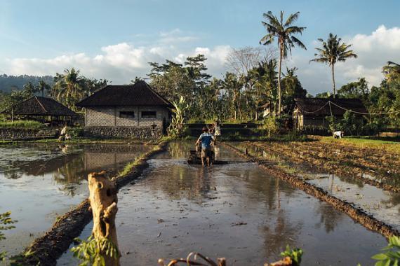 Rizière (irrigation)
