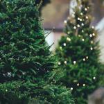 deux sapins de Noël qui brillent de mille feux