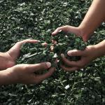 Mains plongées dans une substance recyclée